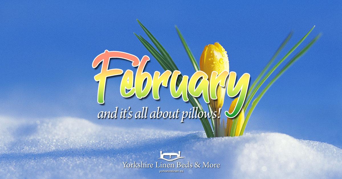 February at Yorkshire Linen Beds & More OG01